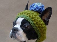 Doggy Sweater, coat or hat