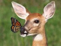 Deer to My ❤️
