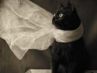Graceful & Beautiful Felines--domestic, large, and extinct