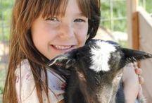 Goats / A herd of alpine goats that supplies milk for Goat Milk Stuff. #GMSKids / by Goat Milk Stuff