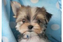 Puppies for Lahn / by Lewanna Blake