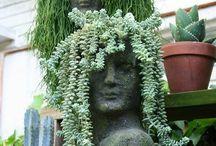 Plant Life / by Jennifer Malesich