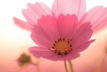 Flowersss. / by Amanda Roark