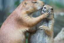 squirrels are great! / squirrels and more squirrels....somebody has to love them and I do! / by Donna O'Connor