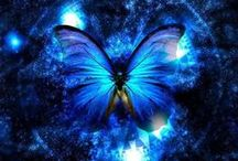 Butterflies / by Donna O'Connor