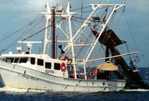 My love of Shrimp Boats / by Susan Marie