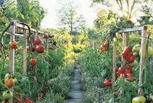 The Lady Gardener / by Nancy Moore