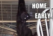Cats - All Black  / I LOVE black cats! / by Jerri Oyama