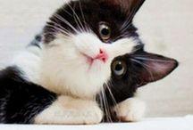 Cats-Tuxedo  & Blk &wht spots / by Jerri Oyama