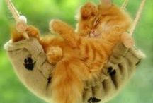 Cats-Tabby- orange,tan,& red. / by Jerri Oyama