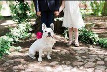 [ wedding ] / by Ashley Ludaescher