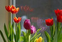 Flowers / by Lelia Seropian