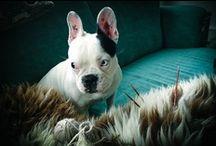 [ pups ] / by Ashley Ludaescher
