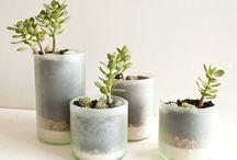 plants / by Jessica Jenkins