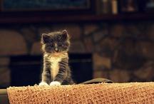 Kittens / by Ami Hermann
