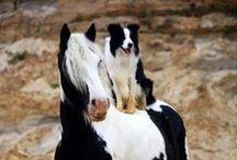 I Love Horses   / by Scorpion 19