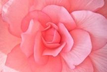 Pink / by R. Healey