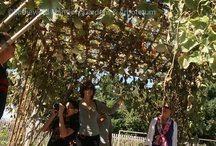 Garden Programs / by Blithewold Mansion, Gardens & Arboretum