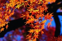 Autumn / by R. Healey