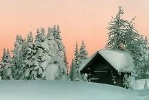 Winter  / by R. Healey