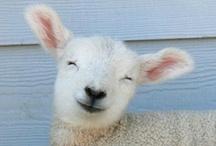 It's so fluffy I'm gonna die! / by Susan Cochran