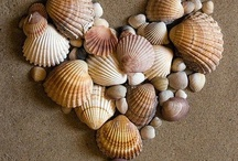 Things To Do with Shells / by Joyce Carcara