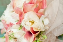 ideas for Megan... / July 28, 2013 North Kingstown, RI clean modern white callas with pops of coral / by the flower girl