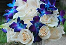 ideas for Christina... / October 4, 2014 Tiffany Ballroom Norwood, MA- royal blue, purple and white with bling / by the flower girl