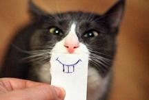 funny | adorable | lol / by Ilona Tar
