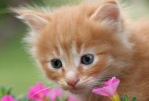 Kitten Corner / by Nature's Recipe