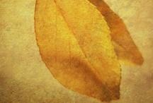 Inspiring Golden Browns / by Kristal Norton