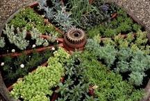 Veggie Gardening / by Cici
