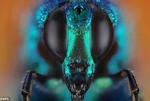 Bugs, bugs, bugs! / by Dawn Townsend