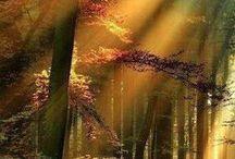 Deep into the forest... / by stellarorbit ❀