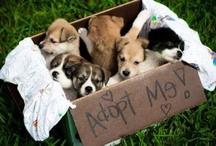 Animals:  Adopt & Rescue... / by Erin Nicole Glatter-Fenlon