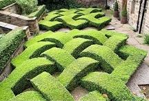 beautiful garden / by Denise Melbie