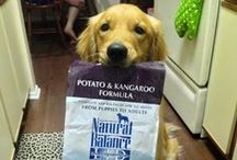 Natural Balance Fan Photos / We love Natural Balance Fans! This board is dedicated to all the dogs and cats who love Natural Balance pet food. www.naturalbalanceinc.com / by Natural Balance Pet Foods