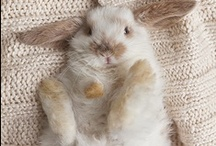 Cute Animals / Cute animals full of cuteness QuQ / by Robyn Buni