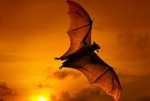 I love Bats / Bats are amazing creatures! / by DeWayne England