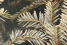 holidays / by Ginny Branch Stelling