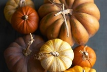 halloween / by Ginny Branch Stelling