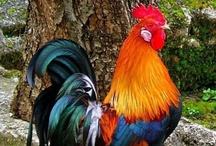 birds! / they make my heart happy! / by Krissy L Akers- Castillo