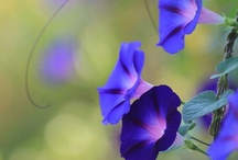 lovely flowers! / The world would be dull without them! / by Krissy L Akers- Castillo