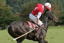 Maryland Sports / From football and baseball to horse racing and jousting! / by Maryland