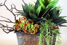 Botanicals / Custom Realistic Permanent Floral  & Succulent Arrangements  I  Design Consultation / by Linda Lara
