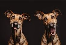 1. Doggies / by Francine Arnold