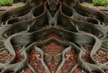 ~Trees~ / I have wandered many miles in them, wrote hundreds of stories under them and lived within them for years, now they are forever a part of me. Please love our trees, we need them & they need us...~M / by Michelle M.