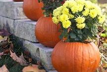 fall / by Karen Kemme