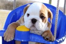 Puppies I Love / by TJ Abrio