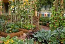 Home gardening ideas, hints, etc. / by Linn Cich-Jones